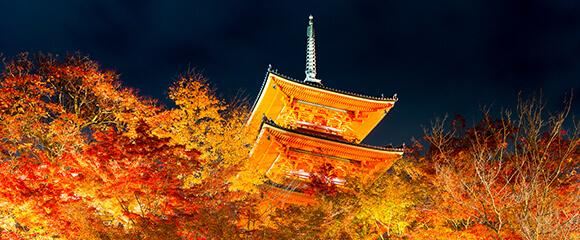 京都の結婚指輪特集